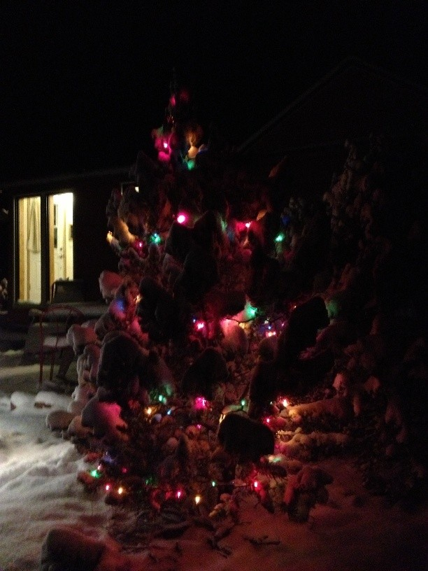 Winter in our Tiny House - O Christmas Tree, O Christmas Tree....
